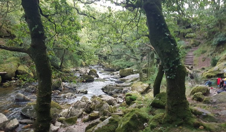 Dartmoor summer 2017